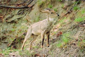 Wildlife Sanctuary in Uttarakhand