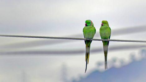 birds in uttarakhand